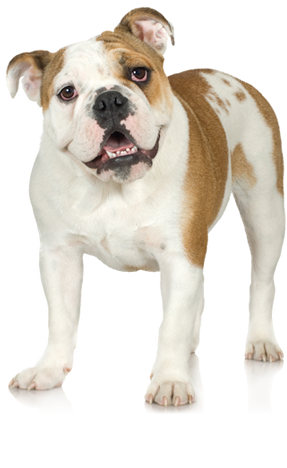 dog breed questionnaire dog breed selector animal pla