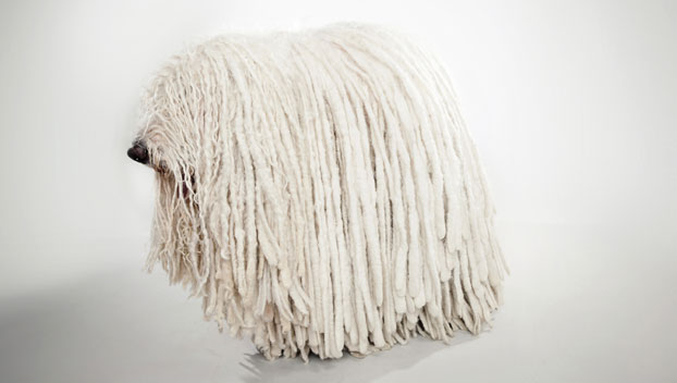 komondor dog breed selector animal planet