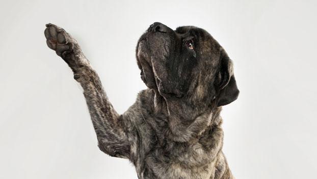 Akc Dog Breeds Alphabetical | Dog Breeds Picture