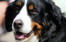 Pet Friendly Dog Breeds