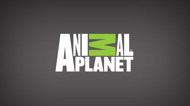 gallery for gt animal pla  logo