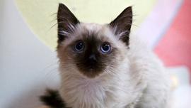 Animal Planet Live - Kittens