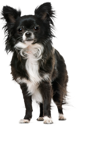 Dog Breed Questionnaire Dog Breed Selector Animal Planet