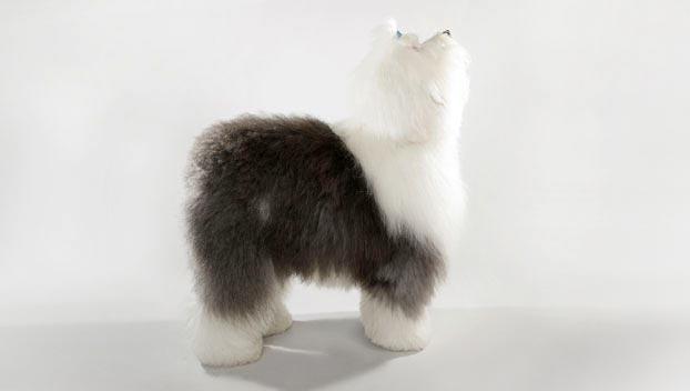 Old English Sheepdog : Dog Breed Selector : Animal Planet